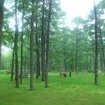 13774770 - 【2012年06月】苫小牧アルテンで森林浴♪