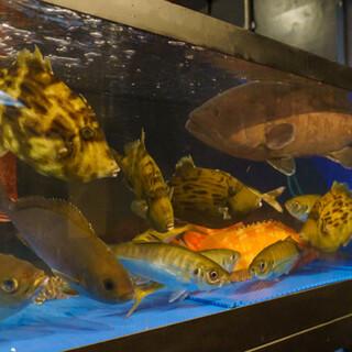 生けすから取り出して調理する鮮魚や日替わりの逸品をお届け