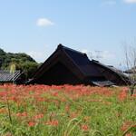 138174668 - 彼岸花が咲きはじめていました