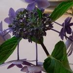 13855887 - テーブルの上にある花