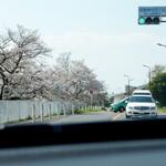 多摩川ダイナー - 多摩川沿いの桜が・・