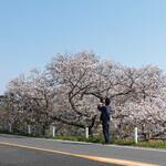 多摩川ダイナー - 満開〜♬ 気持わかります!