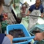 大阪産(もん)料理 空 - 大阪産のお魚は漁師さんから直接仕入れます。