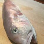 樽八 - 白甘鯛