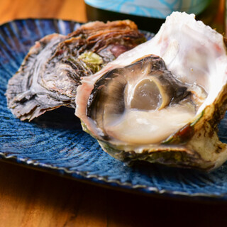 当店名物!隠岐の島の岩牡蠣「春香」、寒シマメのづけ丼
