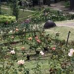 139409498 - 靱公園バラ園