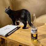Cat Cafe てまりのおうち - コロナにはカッコいい黒猫が似合う…?