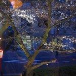 枝魯枝魯ひとしな - 窓からは高瀬川の桜がよく見える