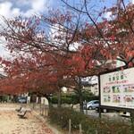 うを治 - ちょっとお店こら離れてるけど良い公園のナマヅ公園(笑)。食後に休憩しました。春は桜が素晴らしい公園です。