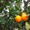Oranjegaruten - 料理写真: