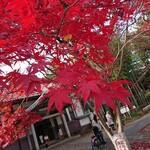 一茶庵 - 紅葉は終わりかけていたが紅葉は相変わらず美しかった 202011
