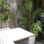 バレットカフェ - 観葉植物もきれいに生い茂ってます