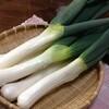 手打ちそばと鴨料理 一穂 - 料理写真:冬の味覚「下仁田ねぎ」