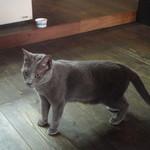 14230428 - ロシアンブルーの猫ちゃん