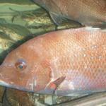 14329319 - 2012.8.15(火)14時半 水族館料理(^_^) 楽しいです!