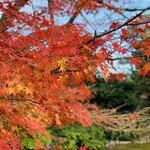 143495439 - ☆金沢兼六園の紅葉。美しい。