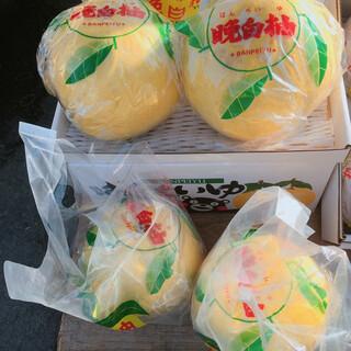 ざぼんラーメン  - 料理写真:ざぼんではありません。近くのトラックで販売されていた晩白柚です。ざぼんラーメンとは関係ないです。