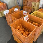 田舎の市場 - 料理写真:みかんの種類によって色単位の値段が貼ってあります!