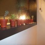 14389552 - 可愛らしい観葉植物が飾ってました♪