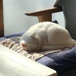 ねこや食堂 - 昼寝中のコナ