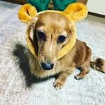 144225795 - クリスマス仕様の愛犬merryU^ェ^U  (オミセとは関係ありません)