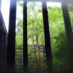 14430093 - お風呂からの眺めと湯色がマッチ。