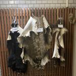 144563810 - ツキノワグマ、猪、エゾシカの皮剥ぎ