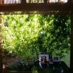 麻屋 - 緑のカーテンできました