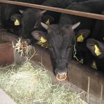 焼肉 激 - 三大和牛である近江牛です。