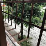 145583882 - 2階窓際から 格子が良い感じに年季が入っています