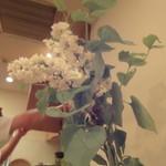 小石川 かとう - 5月某日のお花