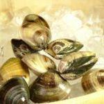 御酒処 まいど屋 - 貝類で有名な三重県産のはまぐり!こちらは2個で700円!一度食べたらヤミツキに!