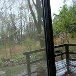 1461547 - 店内からの裏庭の風景が癒されます