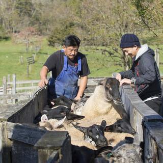 国内24人の羊飼いから直接仕入れる本物の羊肉