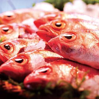 新潟名産白身のトロ高級魚〈のど黒〉