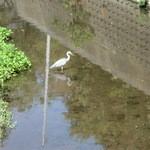 蕎麦 惠土 - 付近を流れる森戸川