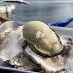 島田水産 - 玉の様にまんまるの牡蠣