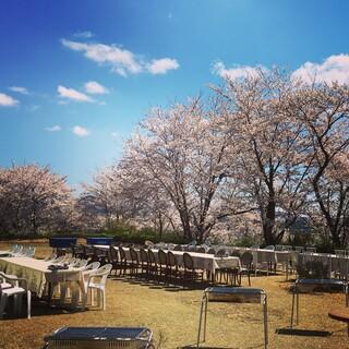 ピンク色に色づき始めた桜の中でBBQを堪能。花見・夜桜に◎
