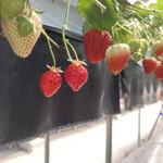 イチゴ ワールド -