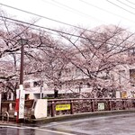 FRAMES - お店近くの目黒川の桜