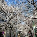 148232572 - 桜丘のさくら通り