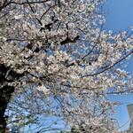 148244429 - 市ヶ谷駅の桜