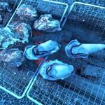 海の駅しおじ - 牡蠣BBQ
