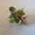 il Ktutti - 料理写真:柔らかなヤリイカの中には春らしい甘味のうすいえんどう豆のピューレ、その下には魚介の旨味が詰まったホタルイカのムースが