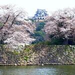 149185961 - 彦根城の桜は7分咲き