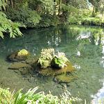 明神そば - 明神池の水面