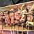 やきとんのみつぼ - 210415木 東京 やきとんのみつぼ 池袋店 たん、かしら、なんこつ