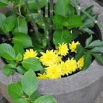 山の寺 邑居 - 入口脇の花