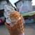 むさし - 料理写真:岩国れんこん(450円)