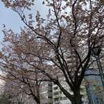 150423999 - 桜